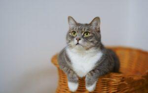 Katzen Produkte